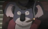 Don koala