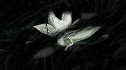 Obito se protege del Amaterasu con sus Esferas de Chakra