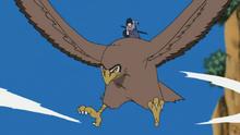 Garuda Anime