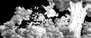 Sasuke vs. Quarteto do Som