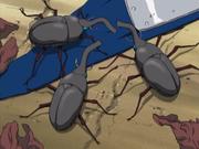 Besouros Bikōchū