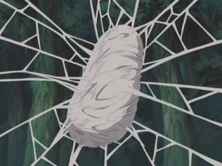 Spider Cocoon