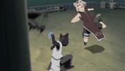 Sakura se enfrenta a un gato ninja