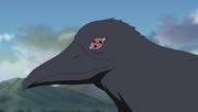 Cuervo de Itachi en el anime