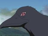 Cuervo de Itachi