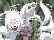 Transformación Combinada de Hombre-Bestia Lobo de Dos Cabezas Anime