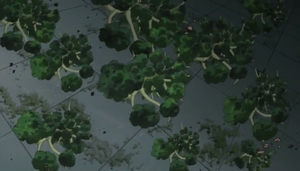 Elemento Madera Nacimiento de un Mar de Árboles Anime