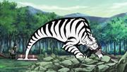 Tiger Vision Staring Bullet1