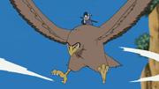 Sasuke Hawk