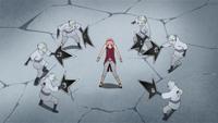 Shins surround Sakura