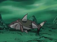 Tubarão de Ruiga