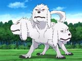 Transformation en Loup Tricéphale