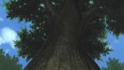 Konan's paper tree