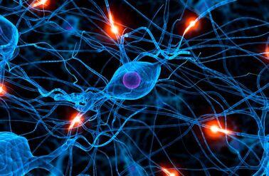 10-cosas-que-el-sistema-nervioso-controla-5