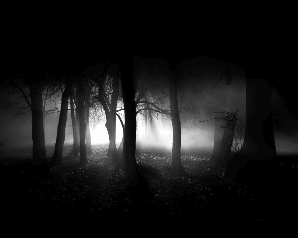 image dark forest the dark side of everything 5587682 1023 818 jpg