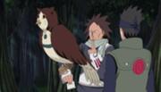Motoi convoca uma coruja para transportar sua mensagem para a sede