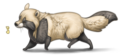 Raccoon dog wallpaper by servaline-d35ixye