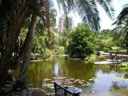 Lovia - 800px-City botanic gardens (duck pond)