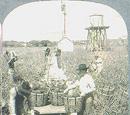 Morgan Plantation