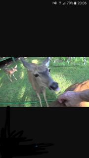 Deermassage