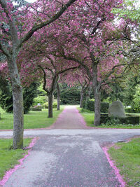 Lovia - Hightech Valley - George Washington Park 450px-Cherry trees at Assistens Kirkegaard