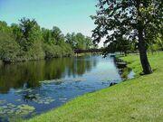 Grassy river bank