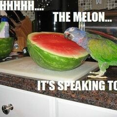 The melons.....they speak....
