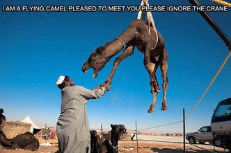 Flying-camel