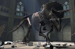 Triceratops natm 3