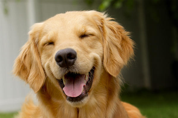 File:Happy dog.jpg