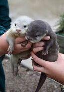Otter150269