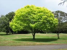 Tree228