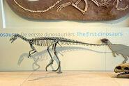 EoraptorWC (1)