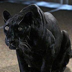 File:Werepanther.jpg