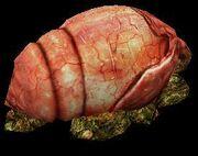 Gestation Egg
