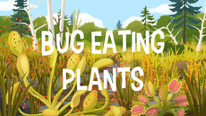 Bug Eating Plants title card
