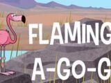 Flamingo-A-Go-Go