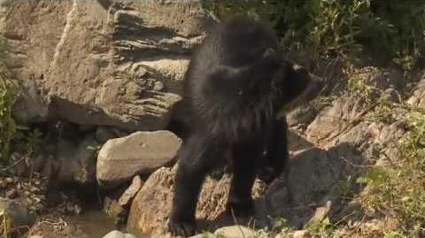 Rare BEARTREK Footage in Peru