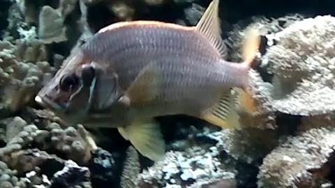 Unbekannter Südseefisch mit orangen Flossen im Zoo München - 22. Februar 2014