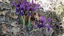 Vlcsnap-2014-03-03-15h27m41s246