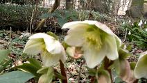 Vlcsnap-2014-03-03-15h51m04s189