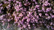 Vlcsnap-2014-03-03-16h28m22s47
