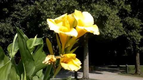 Unbekannte Blume mit gelber Blüte - Botanischer Garten Augsburg - 26. Juli 2013