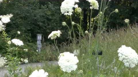 Unbekannte Wiesenblumen - im Botanischen Garten Augsburg - 26. Juli 2013