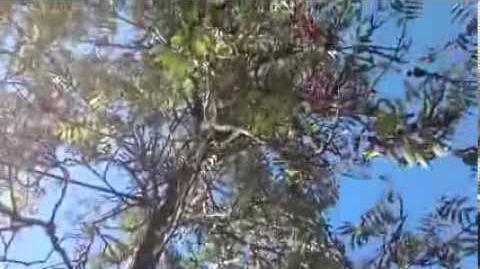 Eberesche (Sorbus aucuparia) oder Vogelbeere im Botanischen Garten Augsburg - 05. September 2013