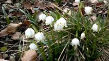 Vlcsnap-2014-03-03-16h15m46s171