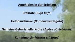 Artenlisten-Ausschnitt2