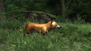 Rabid Fox 02