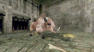Boar Ostian