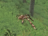 Moss Crawler